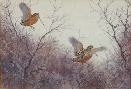 Lot 025: Aiden Lassell Ripley Watercolor Painting of Woodcocks Fine and Decorative Arts of the Globe - Jan 19 2019 Fine Art
