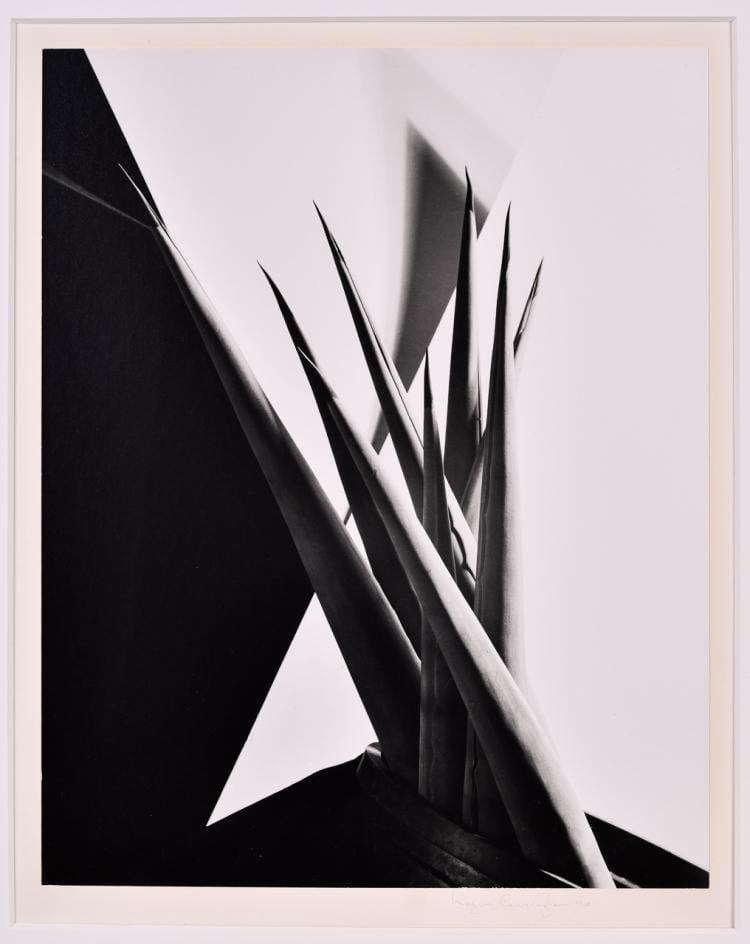 """Lot 032: Imogen Cunningham (1883-1976) """"""""Agave Design I"""" Pencil Signed Silver Gelatin Print"""""""